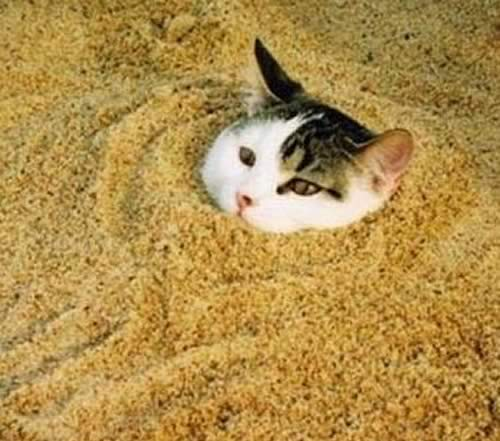 Make Your Own Kitty Litter